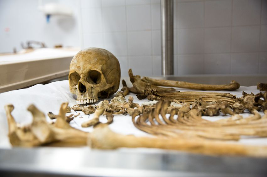 After bodies decompose into bones, researchers organize the skeletons in the labs of the Forensic Anthropology Center at Texas State University.