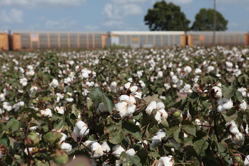 Farmers in the community of Mumford worry that if Union Pacific Railroad acquires the rest of the land it needs to build a new rail yard in the area, the familiar landscape of cotton fields off of FM 50 in the fertile Brazos River Valley will change forever.