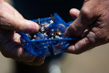 Ronnie Hamrick points out the plastic pellets he collected with a swift scoop of his small net. Point Comfort, Texas. March 20, 2019.