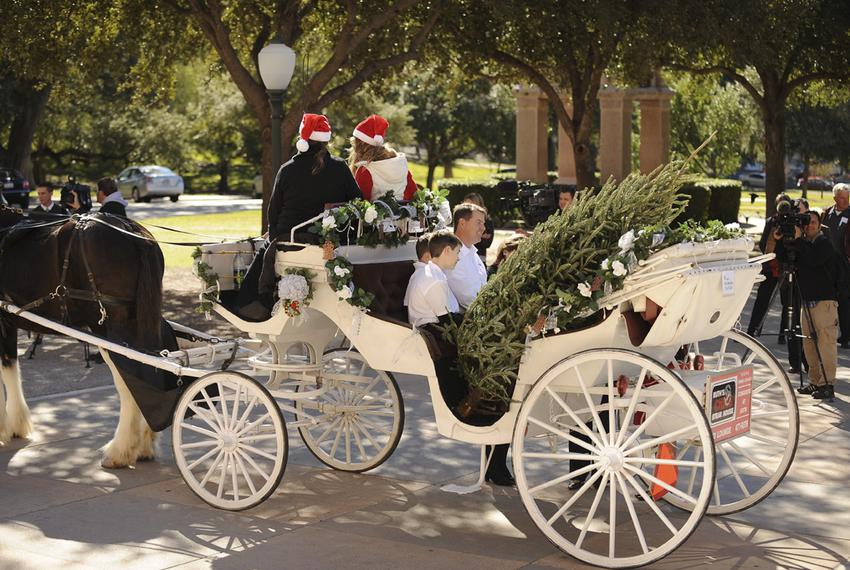 Christmas tree grower Marshall Cathey, center, and his family from Denison, TX arrive via horse-drawn carriage at the Texa...