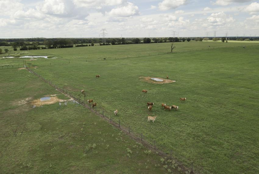 Randa and Charlie Calhoun raise pigs and cattle  on their land in Bedias, Texas, on Sept 15, 2018. A proposed high speed rai…