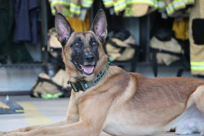 Ferro, a German shepherd, is a patrol and narcotics detection dog for the Collin County Sheriff's Department.