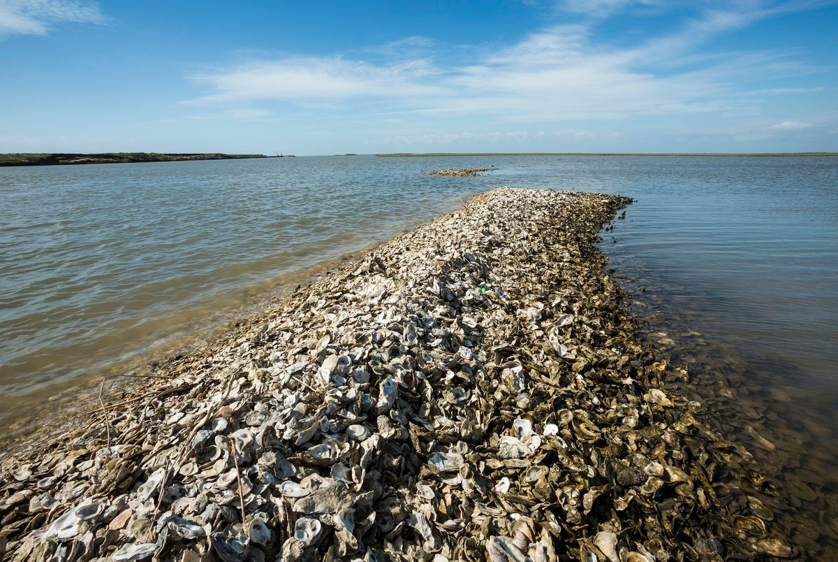 Reef restoration projects aim to bolster Texas' record-low oyster population