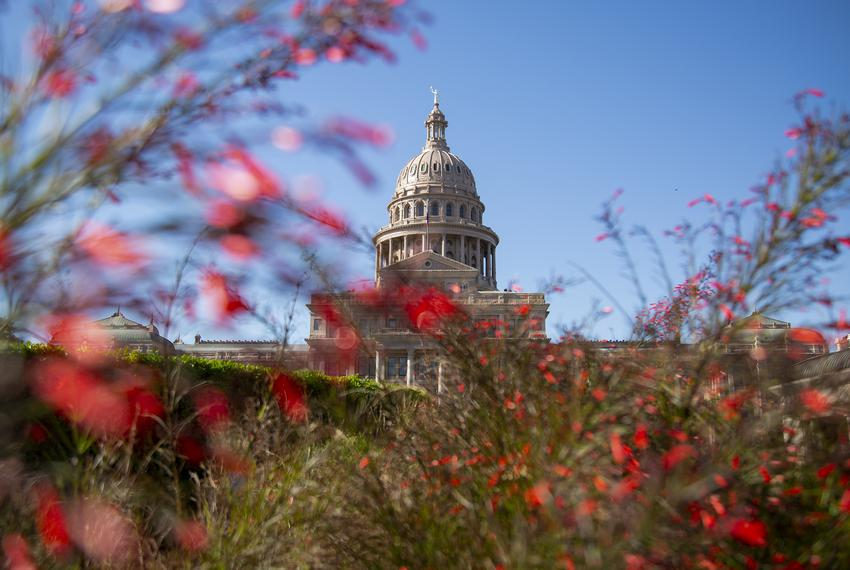 Flowers and foliage outside the Capitol on April 9, 2019.