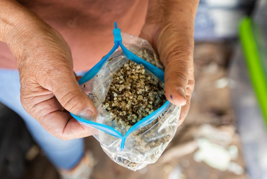 Plastic pellet samples that Diane Wilson has collected over the past three years. She has over 2,000 samples. Seadrift, Te...