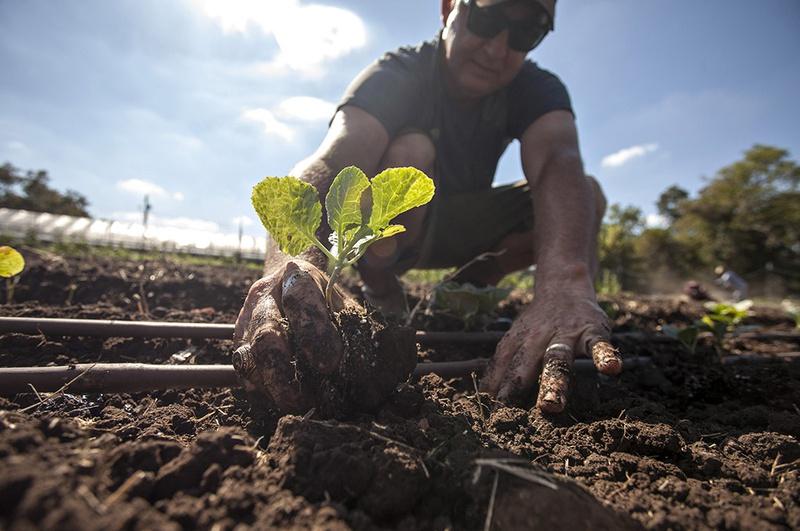 Glenn Foore planting cabbage on Springdale Farm, Austin, Tex. on September 11, 2012