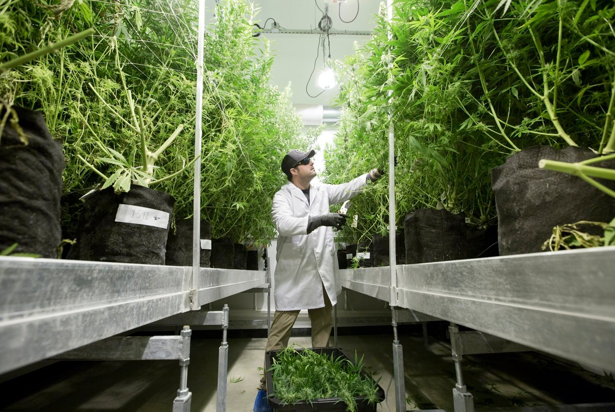 Texas abruptly halts permitting process for new medical cannabis di...