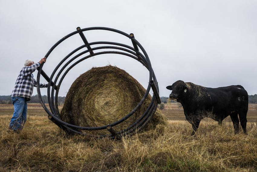 John Stoneham prepares a round bale of hay to feed his cows at his ranch on Wednesday, January 18, 2017 in Grimes County. Th…