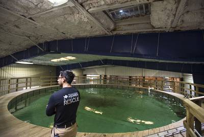 Senior Wildlife Care Specialist Rico Olvera at the Texas State Aquarium Wildlife Rescue 70,000-gallon holding pool for marine mammals.
