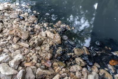 Black residue on the banks of Skull Creek near Altair, Texas, on April 11, 2019.