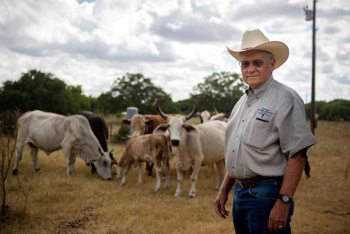Bill Hyman, executive director of the Independent Cattlemen's Association of Texas, with cattle at his ranch in Austin on July 21, 2020.