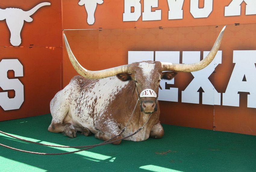 University Of Texas Mascot >> Longhorns Mascot Bevo Has Died The Texas Tribune