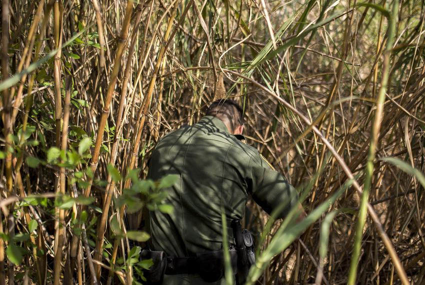 """Border Patrol Agent Isaac Villegas makes his way through the thick growth of reeds known as """"carrizo"""" lining the Rio Grande …"""