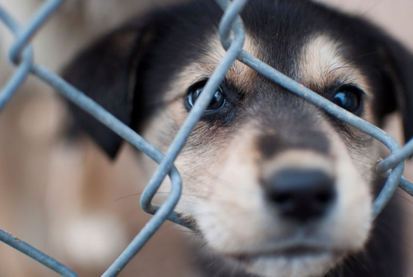 Puppy Mill Law Faces Legal Challenge | The Texas Tribune