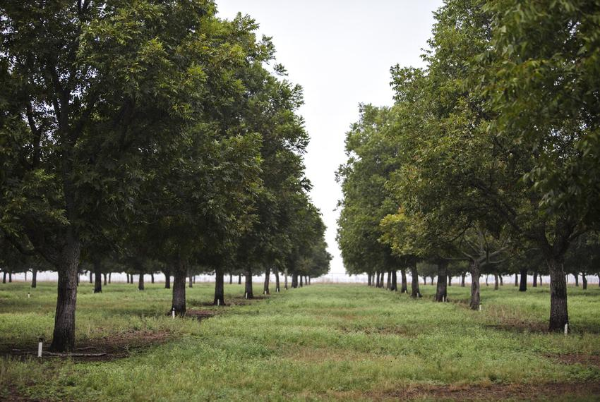 Glenn and JoLynn Bragg invested in growing pecans in Hondo, Texas, before groundwater pumping regulations existed there. A...