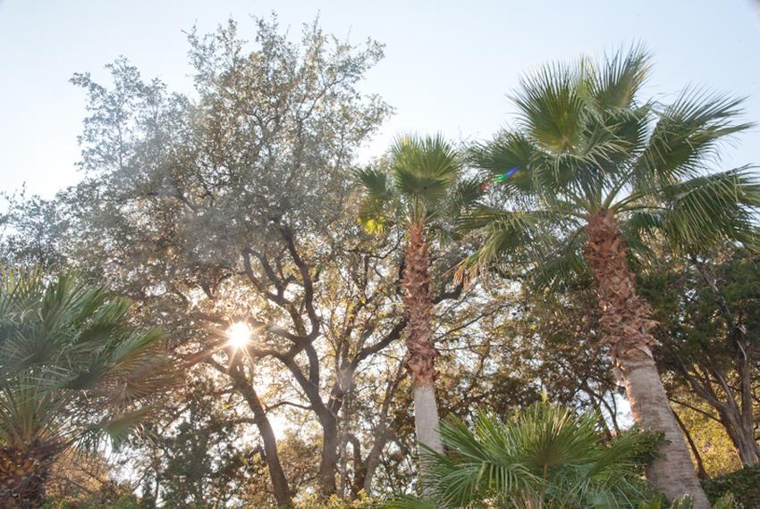 Trees lining Westlake Drive in Austin.