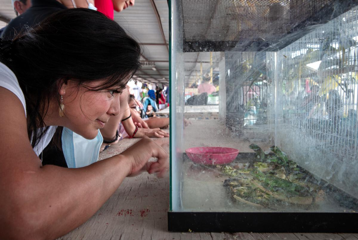 Dennise Hernandez looking at lizards being sold by Gerardo Vela at the Val Verde Flea Market. Donna, TX. June 13, 2021. Dennise uses she/her pronouns.