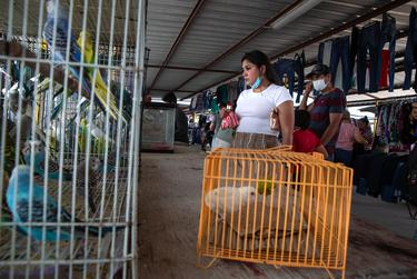 Dennise Hernandez looking at birds and lizards being sold by Gerardo Vela at the Val Verde Flea Market in Donna on June 13, 2021. Dennise uses she/her pronouns.