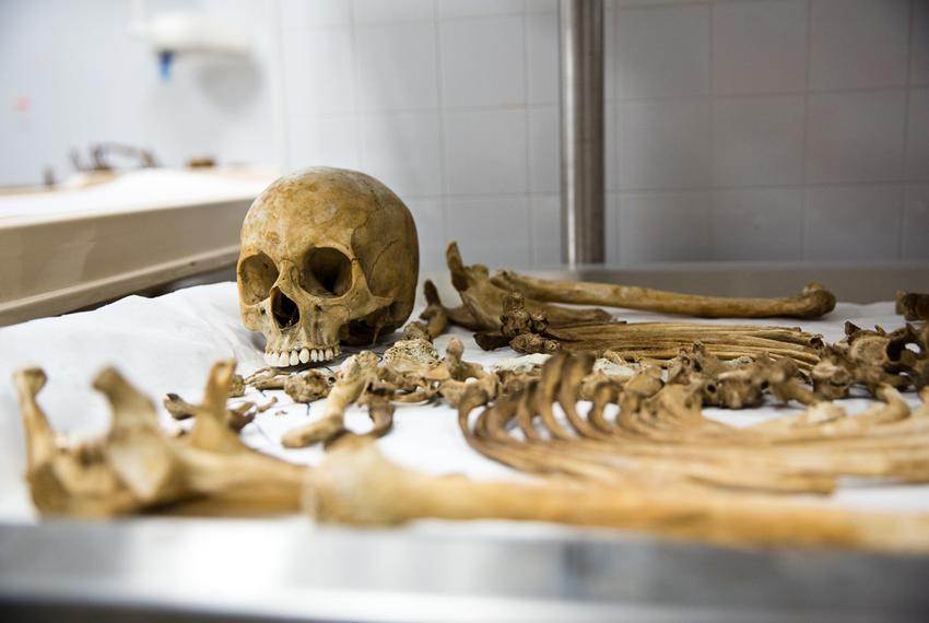 After bodies decompose into bones, researchers organize the skeletons in the labs of the Forensic Anthropology Center at Tex…