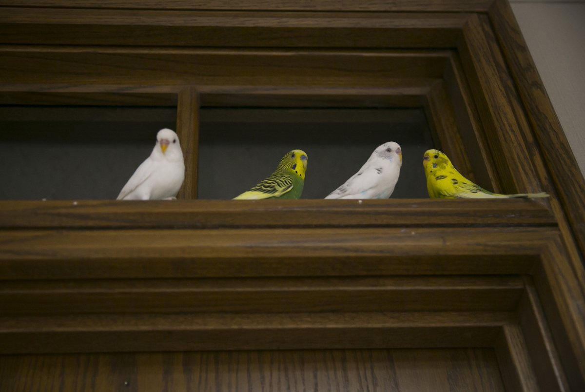 Texas A&M System employees were asked to teach office pet birds to ...