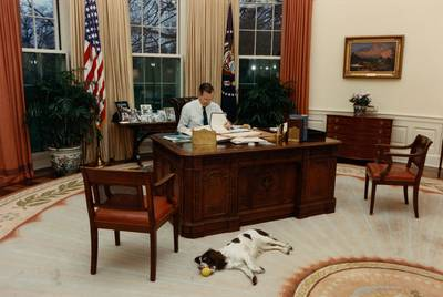 President George H. W. Bush at work in the Oval Office with his dog, Millie. |
