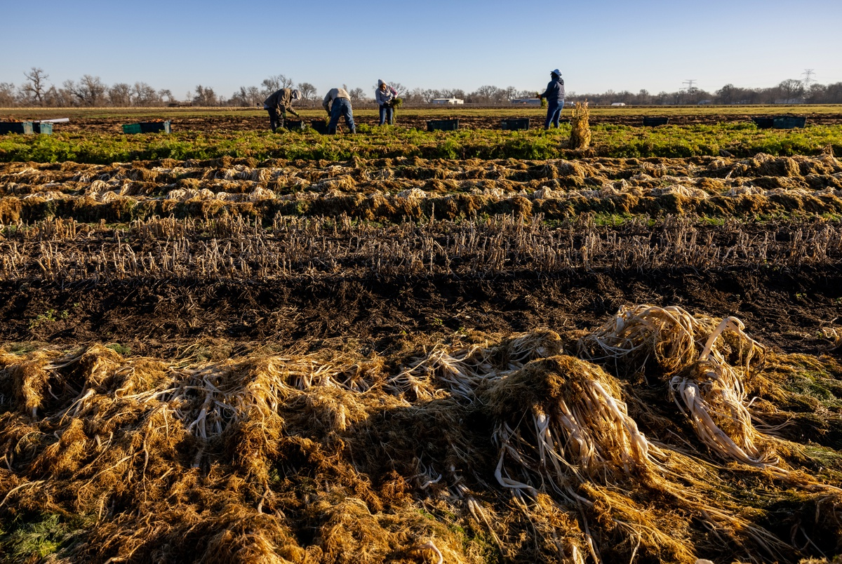 """Watch: Texas farmers start to replant after winter freeze left """"total devastation"""""""