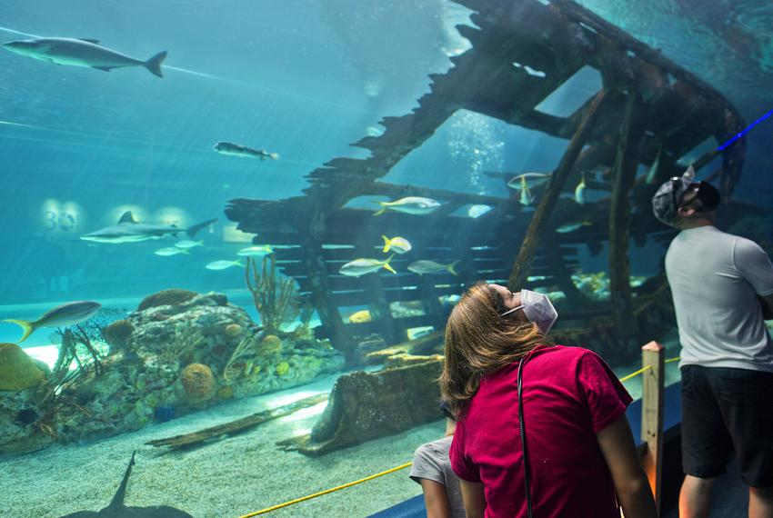 A family tours the Texas State Aquarium in Corpus Christi on the Fourth of July.  The aquarium reduced its capacity to no mo…