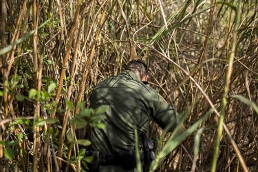 """Border Patrol Agent Isaac Villegas makes his way through the thick growth of reeds known as """"carrizo"""" lining the Rio Grande riverbank while searching for a group of five undocumented immigrants reported to have crossed the river in a raft."""