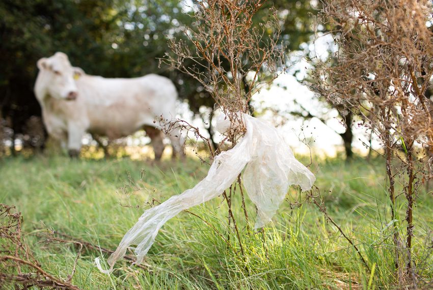 Kristie West, who owns a ranch and bed and breakfast in Pleasanton, has worked to raise awareness about the fatal impact plastic bags have on livestock.