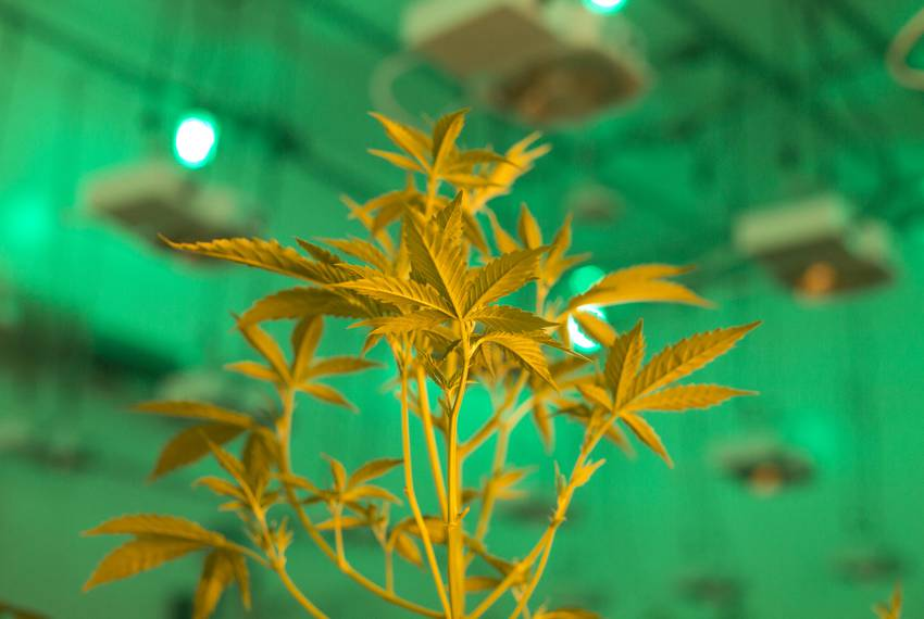 Hundreds in Texas legally use medical cannabis  Are lawmakers ready