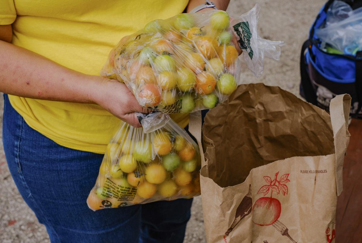 Jennifer Sierra, master gardener, holds a bag of cherry tomatoes in the community garden at Catholic Charities Guadalupe Community Center in San Antonio on Feb. 25, 2021.