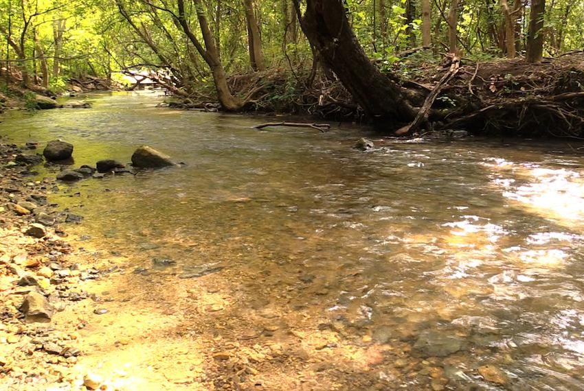 A look at the San Marcos River in Central Texas.
