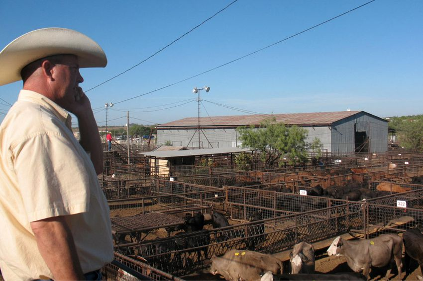 Charley Christensen, general manager of the Producers Livestock Auction in San Angelo, Texas.