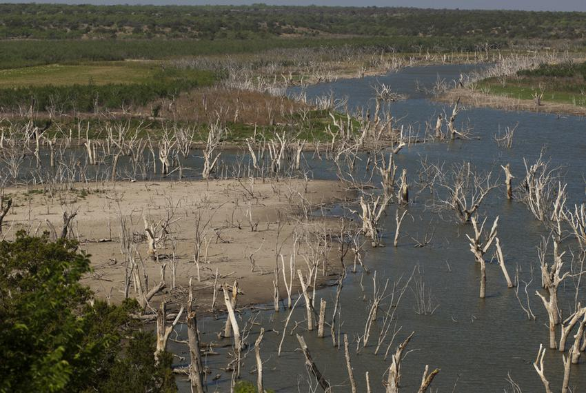 Trees that were once mostly submerged are now high and dry in the southwestern portion of O.H. Ivie Reservoir southeast of...