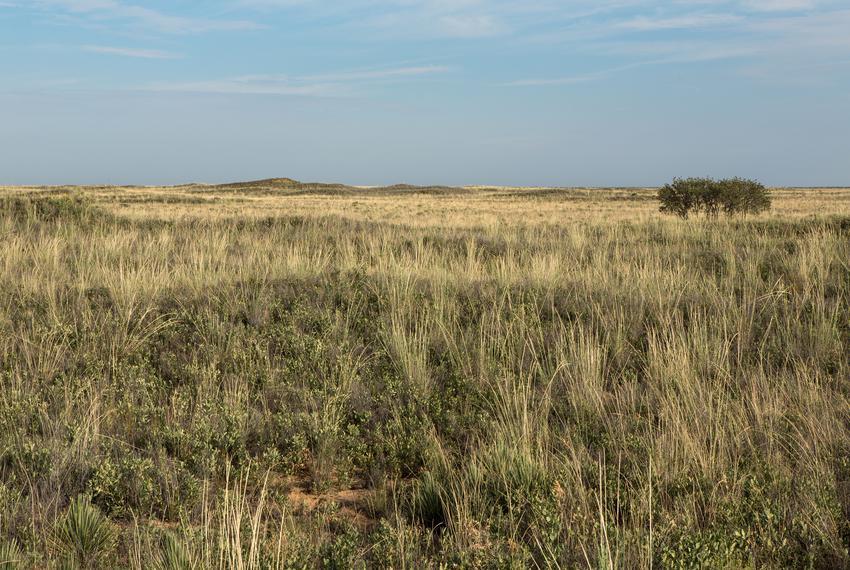 Prairie in Whiteface.