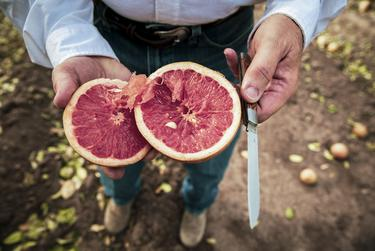 """""""Please support us"""": Texas' citrus and dairy farmers urge patience as they rebuild after the winter storm"""