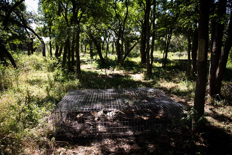 Researchers study the decay of human corpses at the 26-acre outdoor human decomposition laboratory run by the Forensic Anthropology Center at Texas State University.