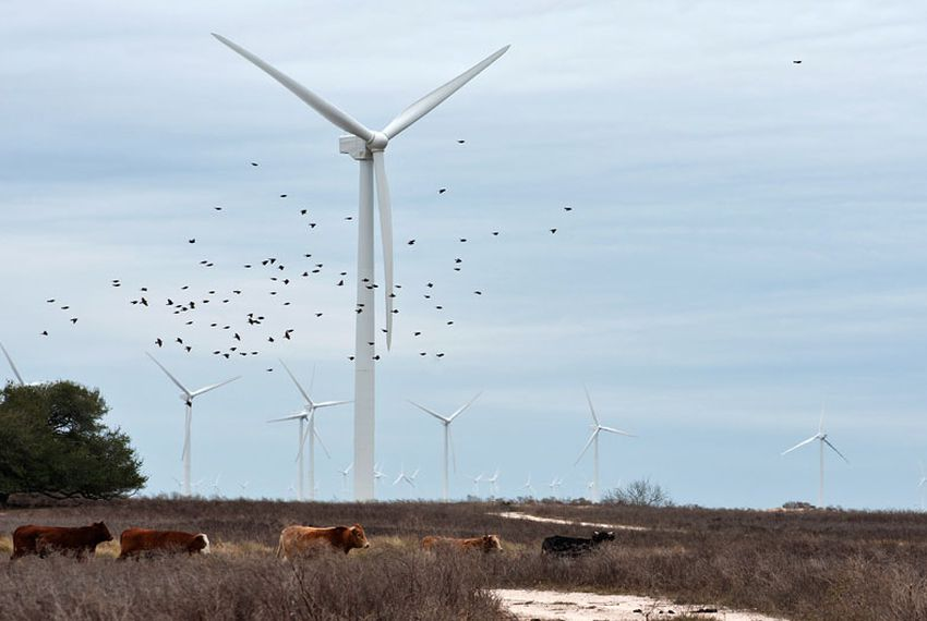 Texas Wind Power Grows Along the Gulf Coast | The Texas Tribune