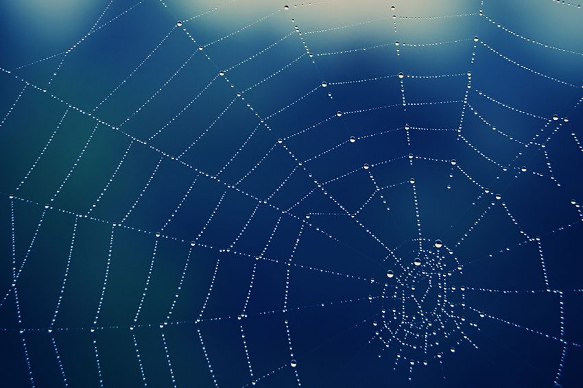 The federal government on Wednesday said a spider found in the Austin area is not eligible for endangered species protection.