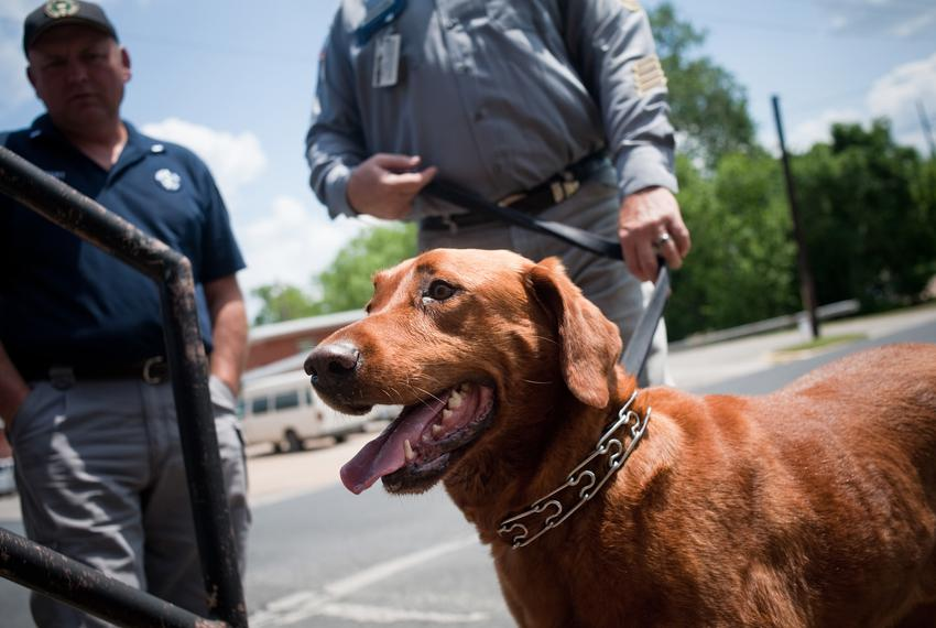 Correctional Officer 5, Mike Warren, (background right) and Lt. Stacy Halbert (back left) look over the contraband dog, Gus,…