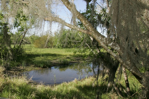 TheSanta Ana National Wildlife Refuge inHidalgo Co. in South Texas.