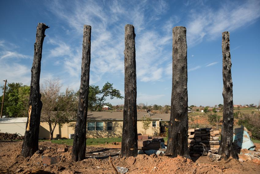 A row of charred pine trees is all that remains in Jones' yard.