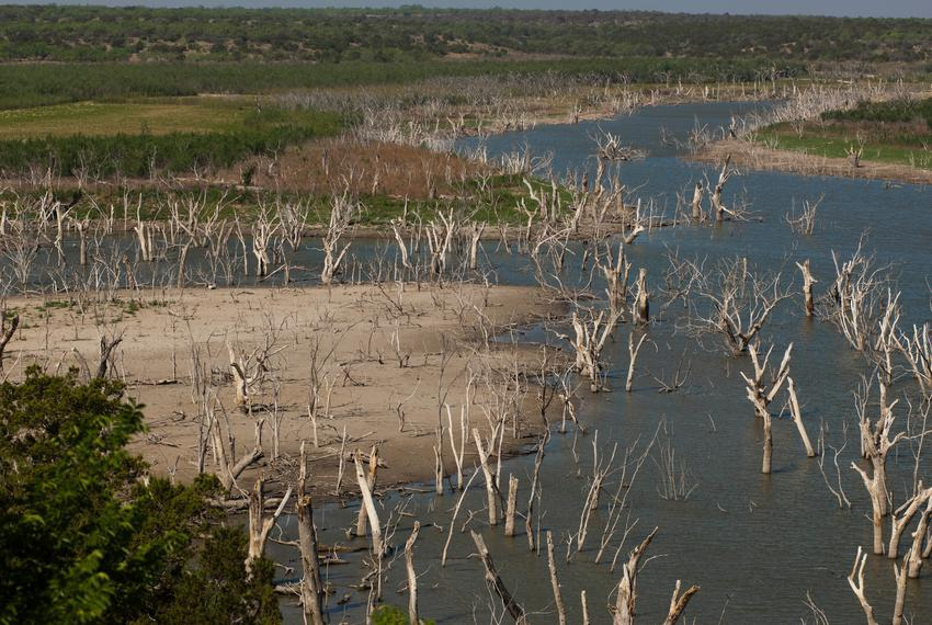 Trees that were once mostly submerged are now high and dry in the southwestern portion of O.H. Ivie Reservoir southeast of B…