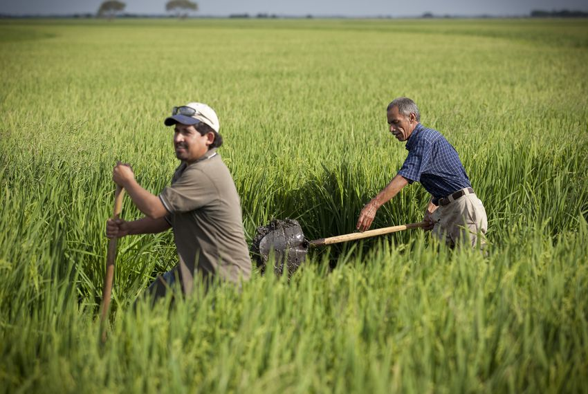 Jose Avila, left, and Hilario Luna on June 13, 2011, repair an overflow damaged by crawdads on a levee of Mike Burnside's rice fields, flooded with water from the Colorado River, near Bay City.