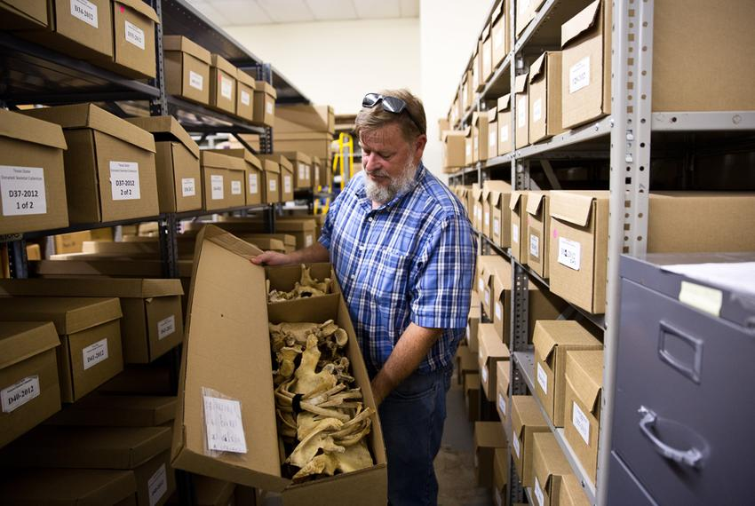 Daniel Westcott, director of the Forensic Anthropology Center at Texas State, shows donated skeletons as they are stored for…