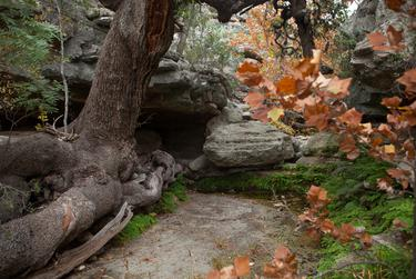 During heavy rains, floodwaters surge through this grotto at the Dolan Falls Preserve.