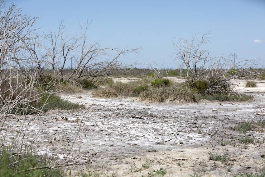 Dead trees, grass and mineral deposits cover an area of the Peeler Ranch that Jason Peeler alleges has been destroyed by the San Miguel Electric Cooperative...