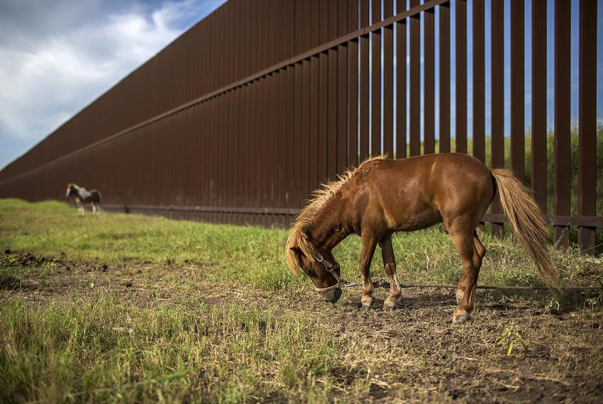 Ponies tied up to the border wall along Oklahoma Ave. in Brownsville on Aug. 10, 2017.